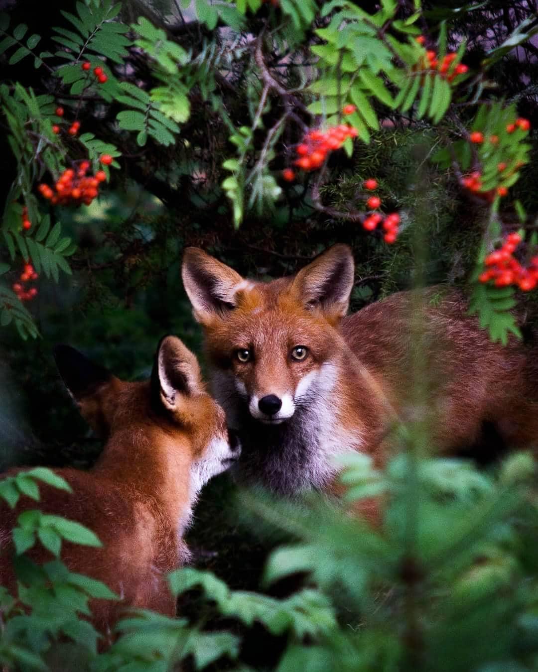Photos Capture Finland S Fairytale Forest Animals In The Wild