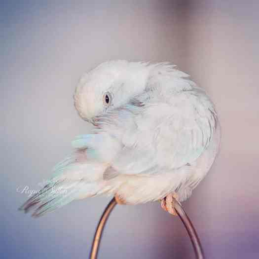 Photography of Birds by Rupa Sutton