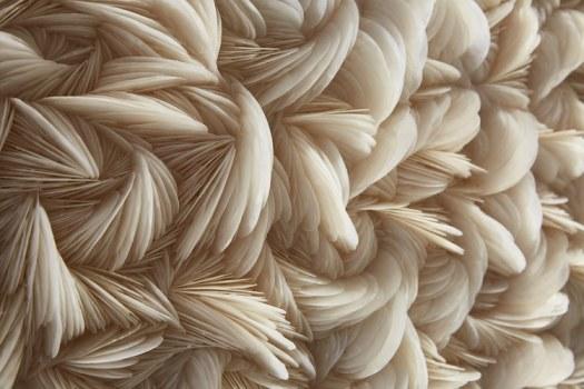 "Seashell Sculpture ""Placuna Praegressus Mini"" 2017, H29 x 17 x 20cm. Windowpane Oyster Shells s by Rowan Mersh"