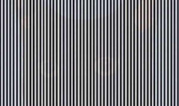 optical illusions find cat # 10