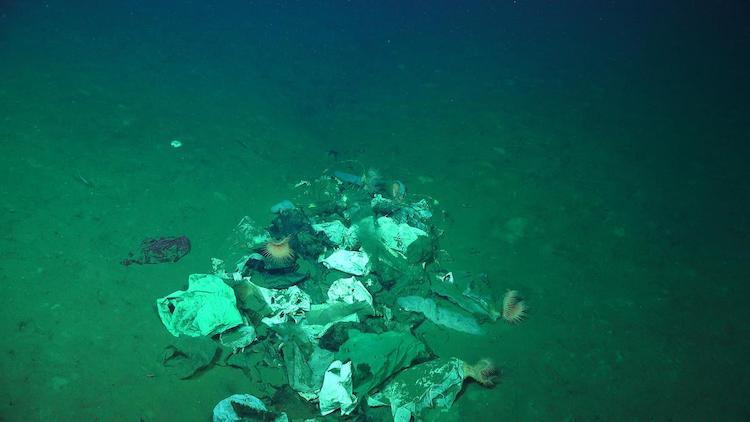 Trash Found in Deep Water