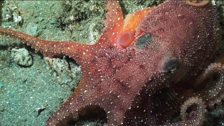 Schmidt Ocean Institute - Falkor - Deep Sea Research in Costa Rica
