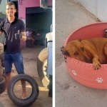 Man Turns Old Tires Into Colorful Cozy Beds For Stray Cats And Dogs