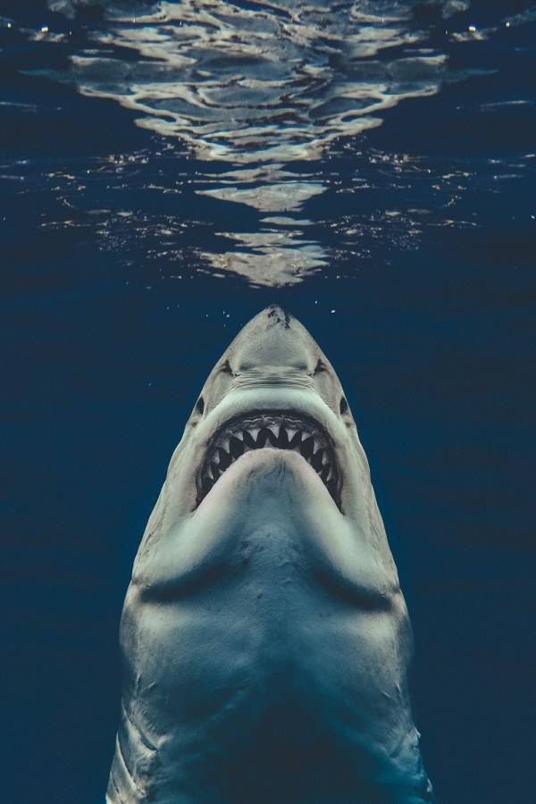 Brave Photographer Recreated Jaws Poster with Real Great