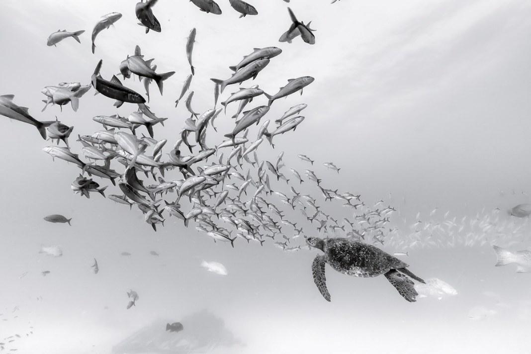 Christian Vizl的水下摄影