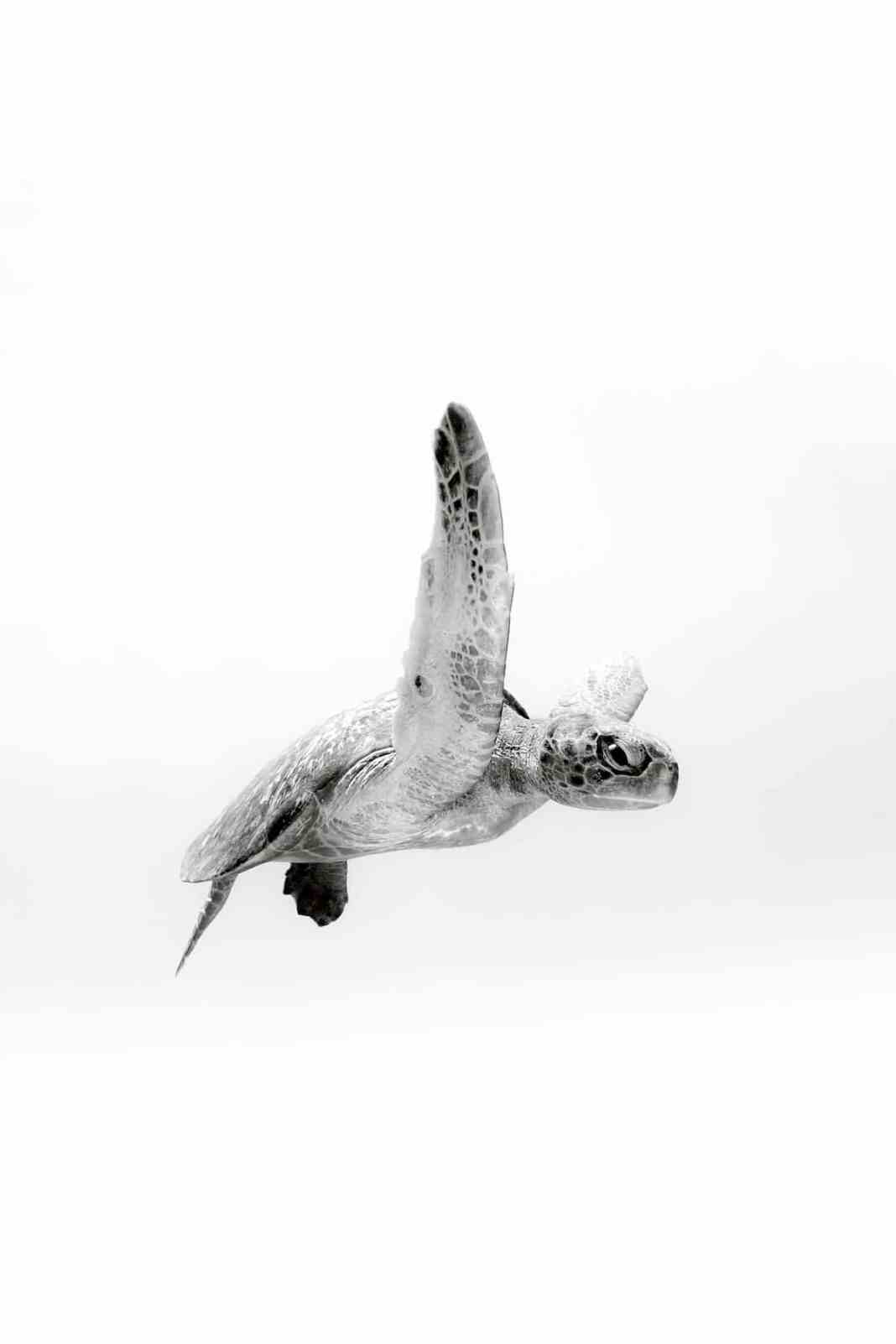Christian Vizl的海龟