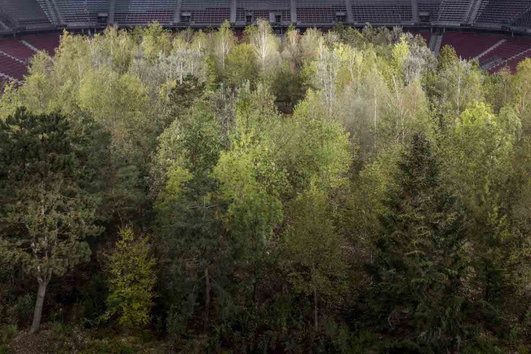 For Forest Installation by Klaus Littmann