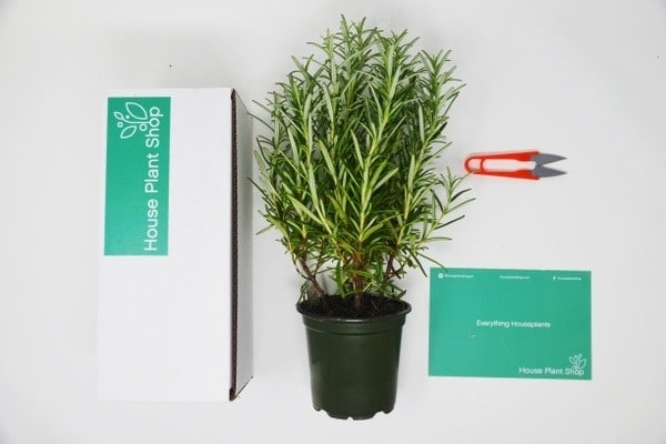 Caja de suscripción de plantas de interior