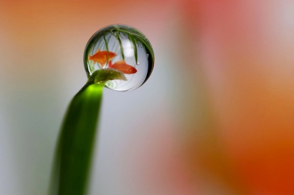 Mind-Boggling Water Drop Reflections (13 photos)