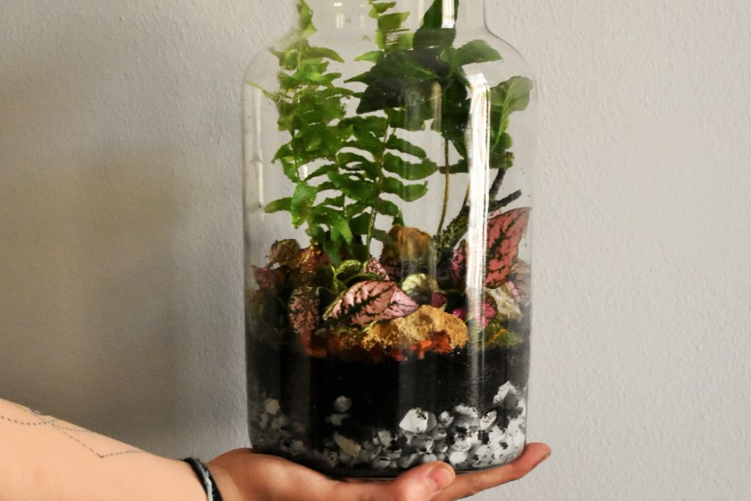 person holding plant jar