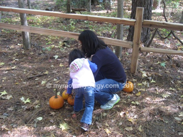 My Mommyology Choosing Pumpkins