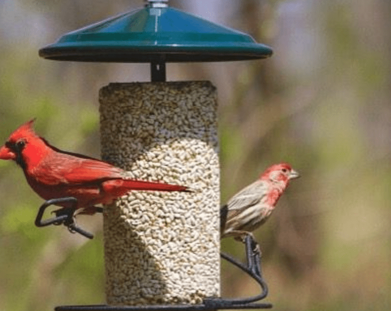 WBU Listens Customer Survey (Wild Birds Unlimited)