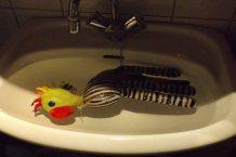 2015, Picasso 3 jaar, Zebra gaat zo nu en dan in bad....
