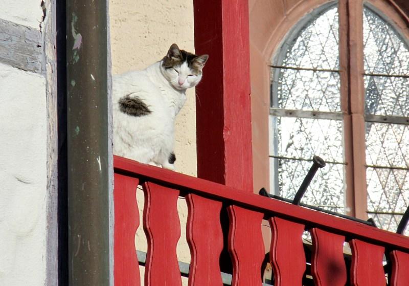 4_Katze_auf_Geländer