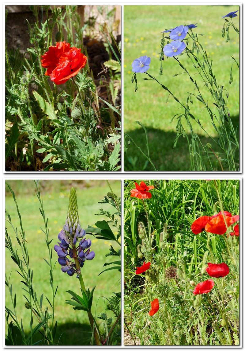 Mein bunter Blumengarten im Mai