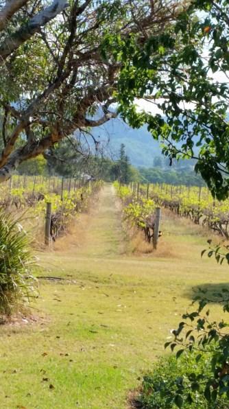 Thalgara vines