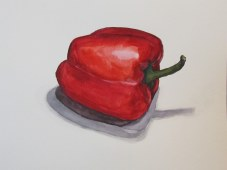 Red pepper, Feb. 12, 2012 watercolour on paper