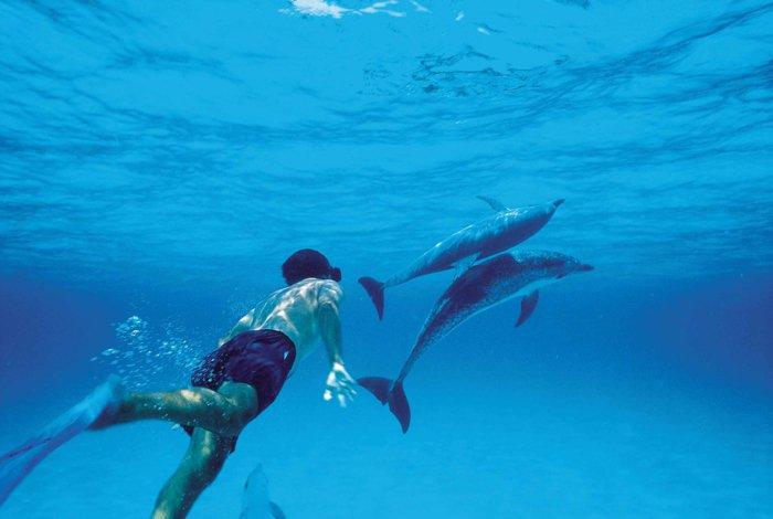 rencontre-avec-les-dauphins-rêver-à-faire-un-nage-photo-dedans