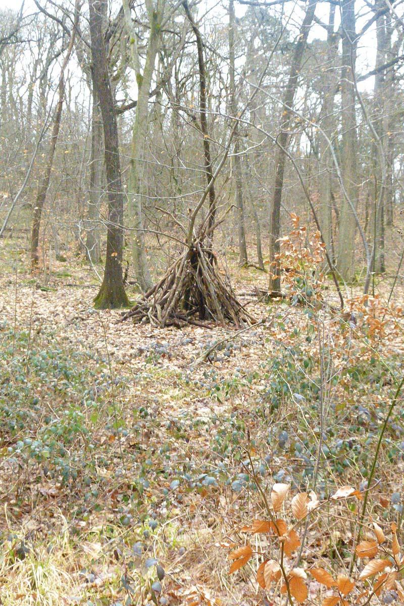 Printemps en forêt - Mooc Botanica
