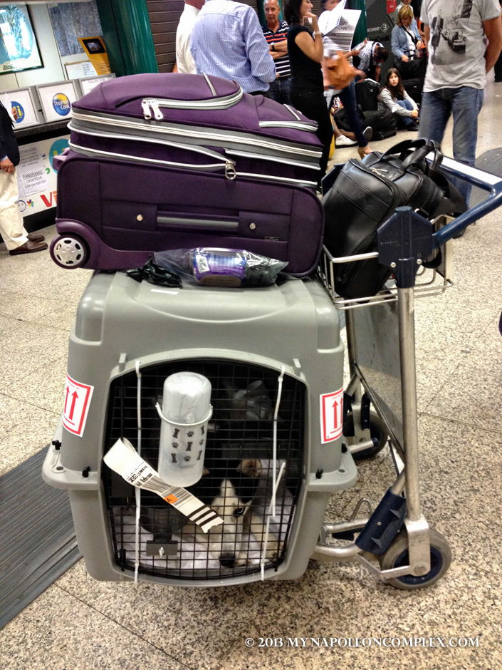 Picture of Husky inside kennel at Fiumicino International Airport in Rome.