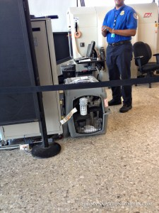 Picture of husky inside kennel at Dulles International Airport