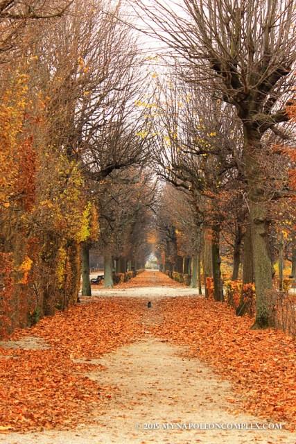 Picture of gardens in Schönbrunn
