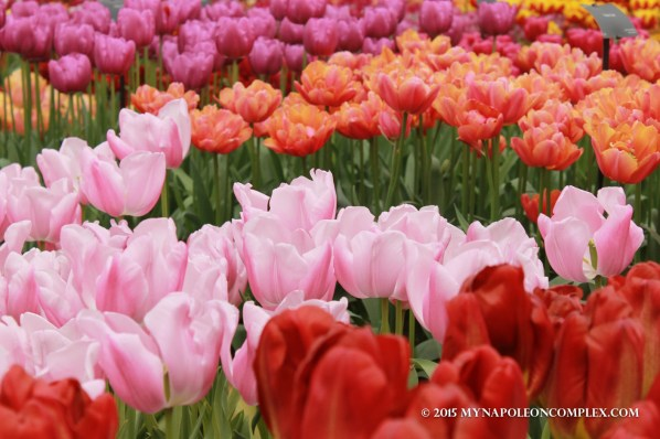 Picture of Keukenhof Garden, the Netherlands.