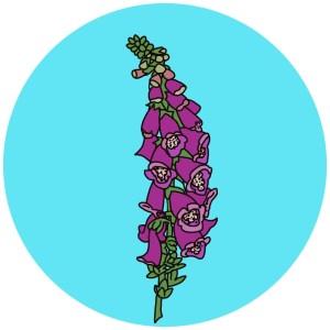 pink woodland flowers, foxglove