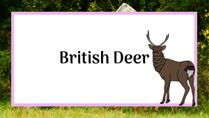 British deer nature blog