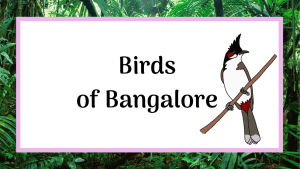 birds of Bangalore