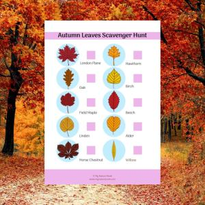 autumn leaves nature scavenger hunt