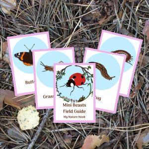 mini beasts ID cards, nature flashcards