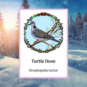 nature activities and resources,turtle dove greetings card