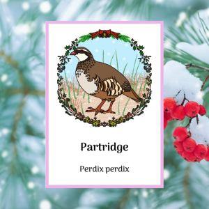 partridge greetings card