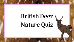 British deer nature quiz