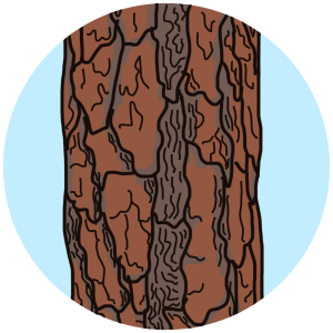 identifying tree bark