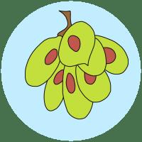 wych elm seeds