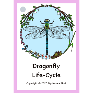 dragonfly life-cycle
