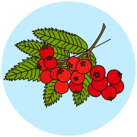 identifying tree fruits and berries