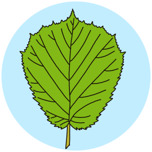 identifying tree leaves, field guides