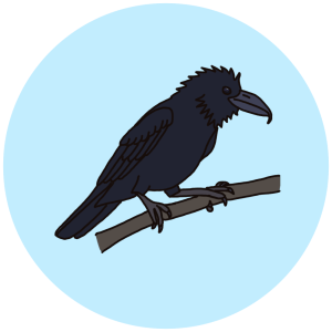 jungle crow, birds of bangalore