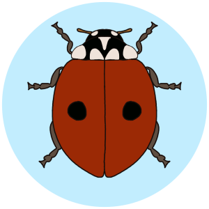 2-spotted ladybird