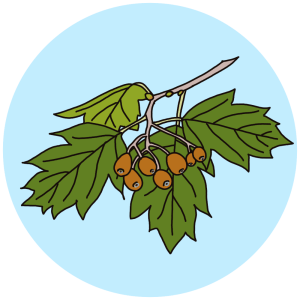 service tree