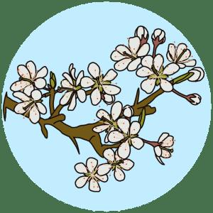blackthorn, spring flowers