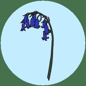 bluebell, spring flowers