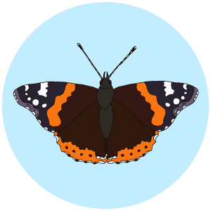 red admiral butterfly, butterflies field guides