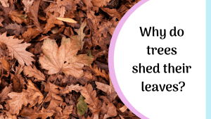 why do trees lose their leaves in the autumn?