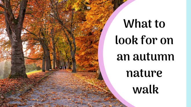 what to look for on an autumn nature walk