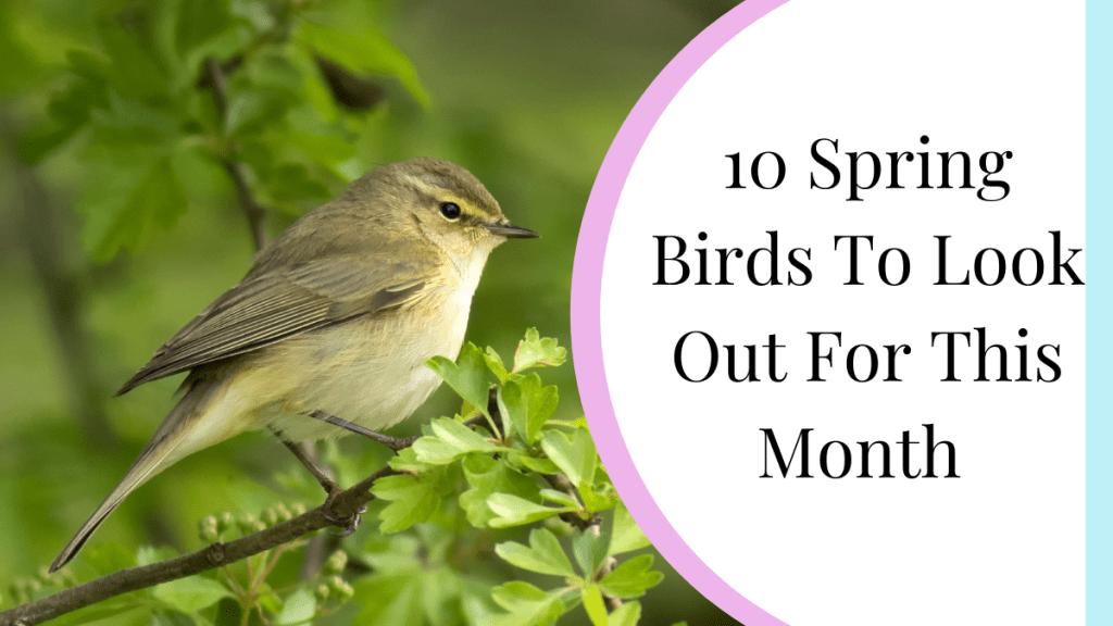 10 spring birds