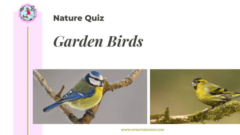garden birds nature quiz